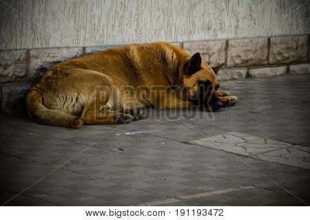 Homeless stray dog sleeping on a sidewalk