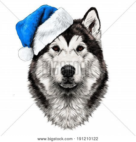dog breed Alaskan Malamute head in a Santa hat looking right symmetry sketch vector graphics color picture