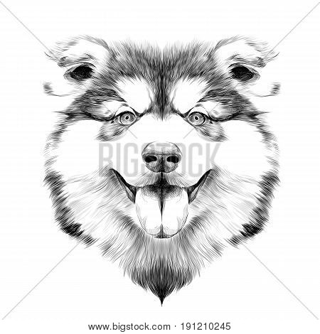 dog breed Alaskan Malamute puppy with his tongue hanging out head looking right symmetry sketch vector graphics black and white drawing with no outline