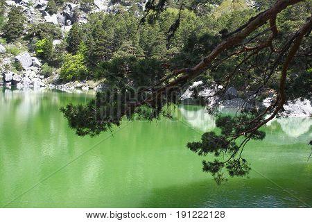 Black Lagoon of Picos de Urbión, Soria, Spain, Pine branches