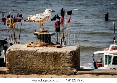 Seagull in a fishing port. In the background of fishing nets and fishing boats and the sea.