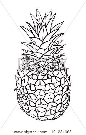Hand drawn illustration of pineapple. Vector sketch pineapple, healthy organic fruit