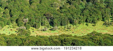 Panoramic beautiful scenery of mountain and small farm along the way on Whanganui river road in National Park in Autumn Whanganui North Island of New Zealand
