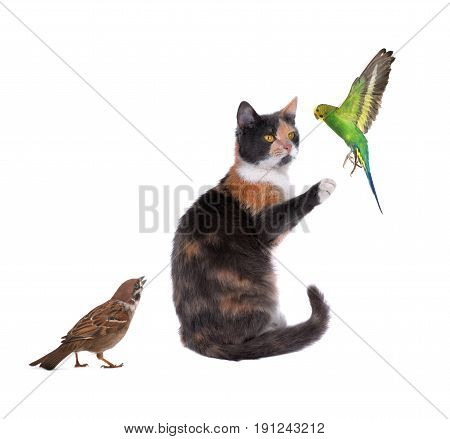 Cat Trainer Of A Budgie