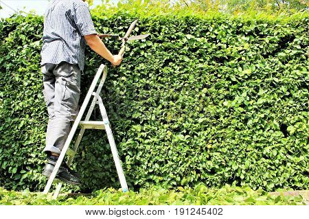 An Image of trimming a hedge - park, nature