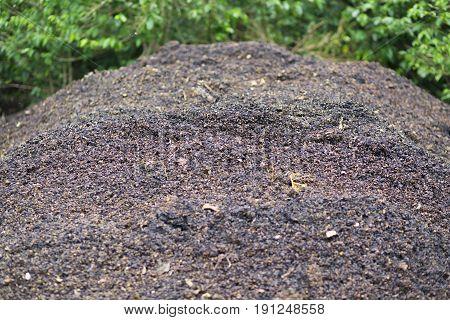 Rotten Fruit On Ground
