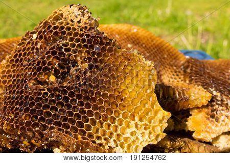 Bienen Honig wabe Honigwabe Honig wild Bienenwachs Bienen Wachs