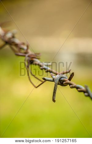 Barbed wire fence in a farm with green background