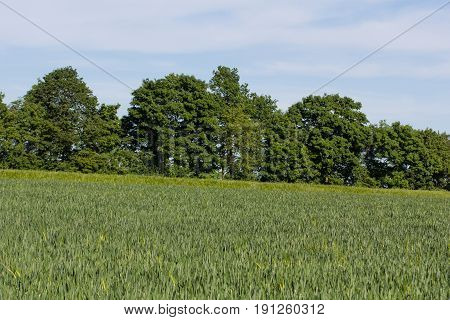 fields - summer landscsape with a lot of trees next to schwandorf in bavaria