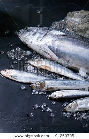 Raw fresh tuna, herring and flounder fish on crushed ice over dark wet metal background. Close up