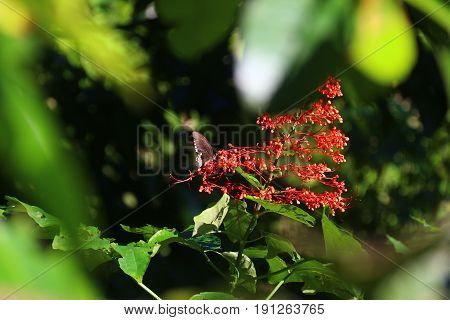 A black butterfly and a small bush of red flowers
