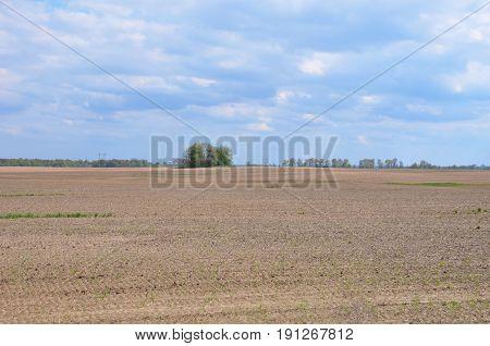 Plowed Field. Planting a wheat field in the spring. Plowed Field in Ukraine.