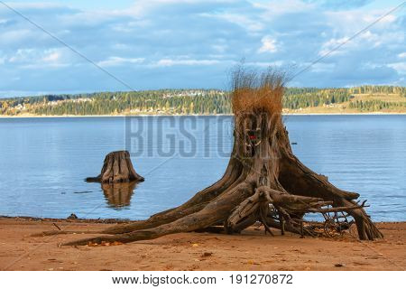 decorated stump on river coast