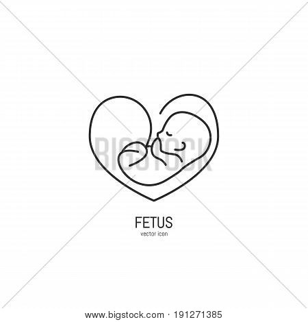 Vector fetus icon in trendy linear style. Gynecology clinic logo design element for hospital site.