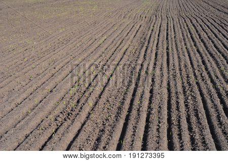 Plowed Field Photo. Planting a wheat field in the spring. Plowed Field.