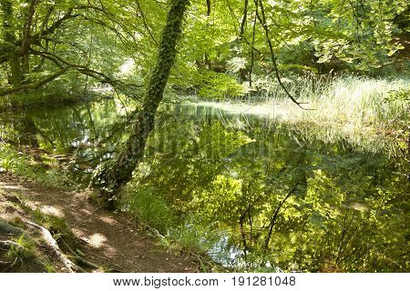Dark green forest reflect in lake - Plitvice National Park UNESCO Croatia.