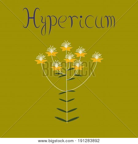 flat illustration on stylish background wild plant Hypericum
