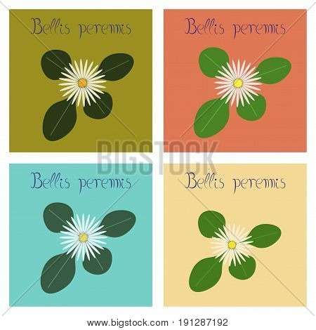 assembly of flat Illustrations nature plant Bellis