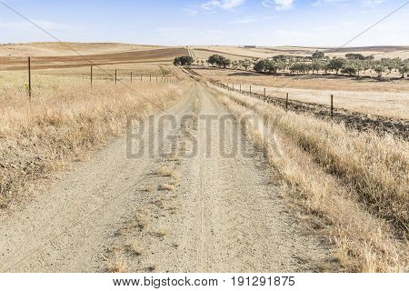 summer landscape with a country road on a summer day next to Fuente de Cantos, province of Badajoz, Spain