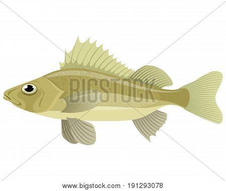 Vector illustration of a fresh water ruff