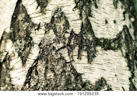 Old Wood Tree Texture Background Pattern .Closeup