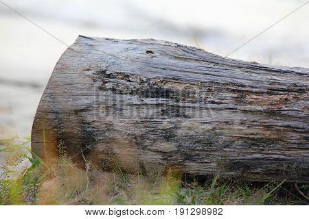 fallen log in the grass A big log cut from a tree fallen on top of green grass