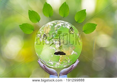 Green world and butterfly in man hand green background Earth image provided by Nasa.