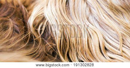 Web banner of long brown dog fur