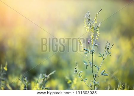 Pollen plants blooming flowers grass in summer