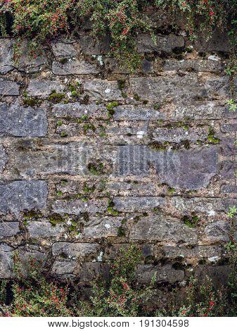 Background in the form of a frame. Above and below is limited by plant growth. Old wall of stones.