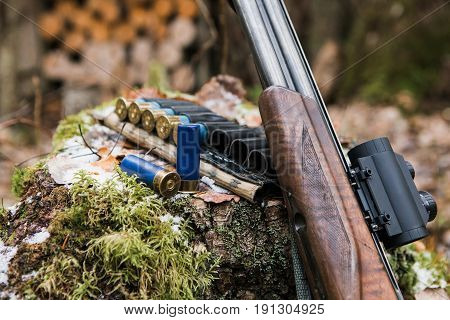 Hunting rifle with ammunition lying in the forest.