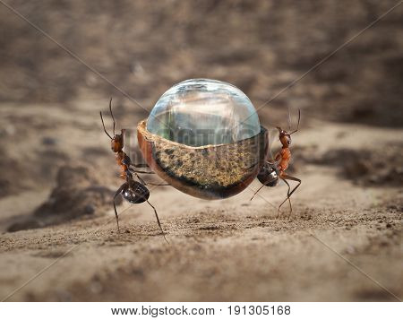 Two ants carrying a heavy load - a drop of water in a nut shell. Sandy desert
