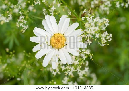 Green naturer with grass and chamomile flower on nature background. Floral spring eco nature frame fresh summer environment greeting card