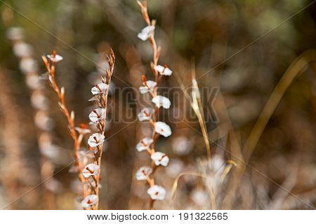 White  Flower In The Grass And Abstract
