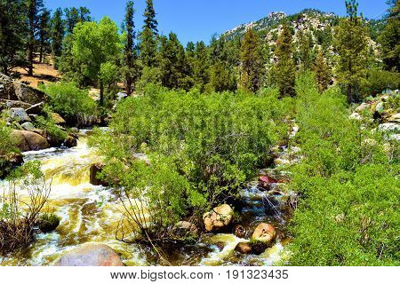 Roaring rapids from snowmelt taken on the South Fork of the Kern River surrounded by a riparian and pine forest taken in the Sierra Nevada Mountains, CA