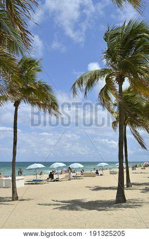 Fort Lauderdale Beach Florida USA - May 16 2017 : Palm trees on Fort Lauderdale Beach