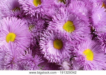 Bouquet of light purple flowers with yellow cores. Closeup