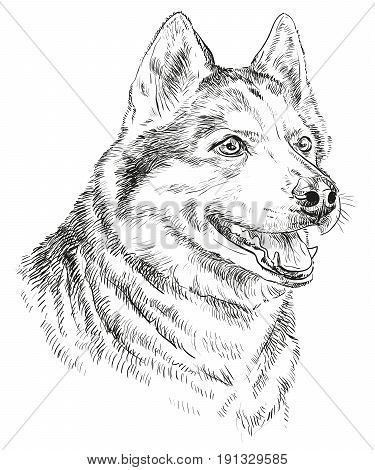 Vector Portrait of siberian husky in black color hand drawing Illustration on white background