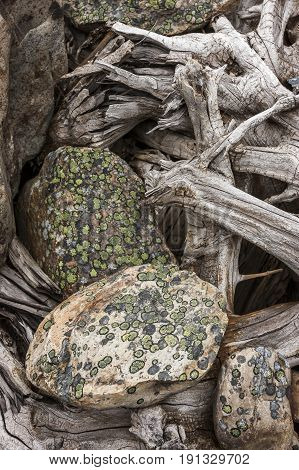 Nature's abstract image. An abstract nature image of lichen covered rocks and old tree roots.