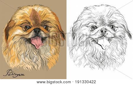 Colored Pekingese dog portrait on beige background and and black color on white background vector hand drawing illustration