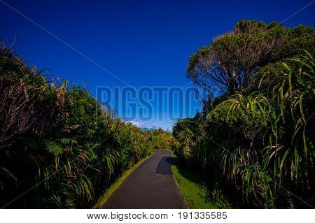 Asphalted pathway through temperate rainforest with trees in south island, in New Zealand.