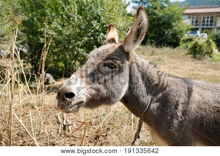 Summer in The mountains. Crimea. Steppe. One donkey is at the house