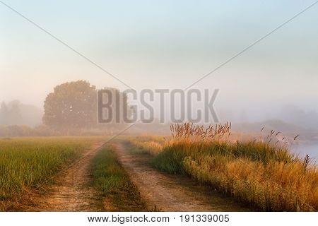 Cane Bushes, Oak Wood, Dirt Country Road On A Misty Riverbank.