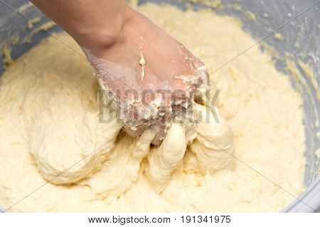 Making dough by female hands . A photo