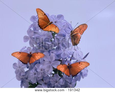 Purple Flower And Butterflies