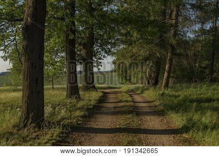 Sunny path near Dacice and Trebetice towns in spring evening