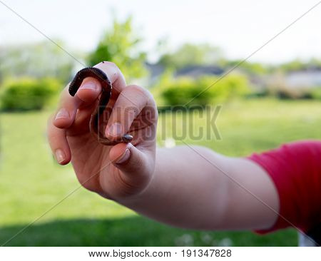 Child holding s-shaped earthworm in his hands