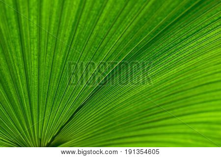 The Palm Leaf Background, Abstract Green Line Texture, Green Leaf Background