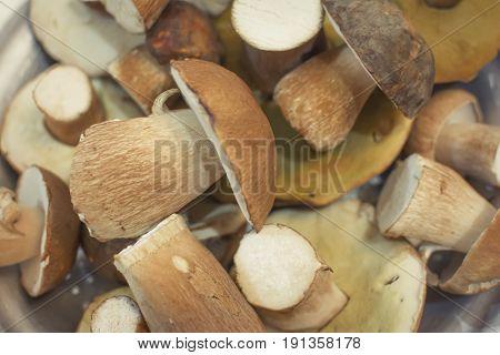 Boletus mushrooms background. Edible mushrooms. Selective focus,