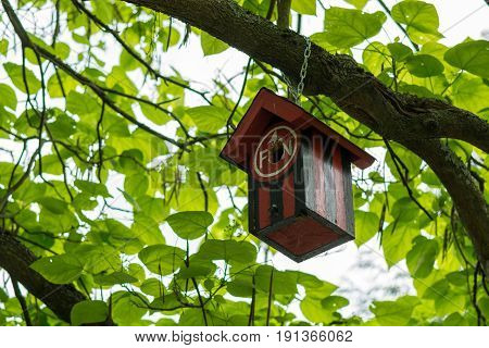 A bird table hanging from a branch with the colors of the football club 1. FCN from Nuremberg